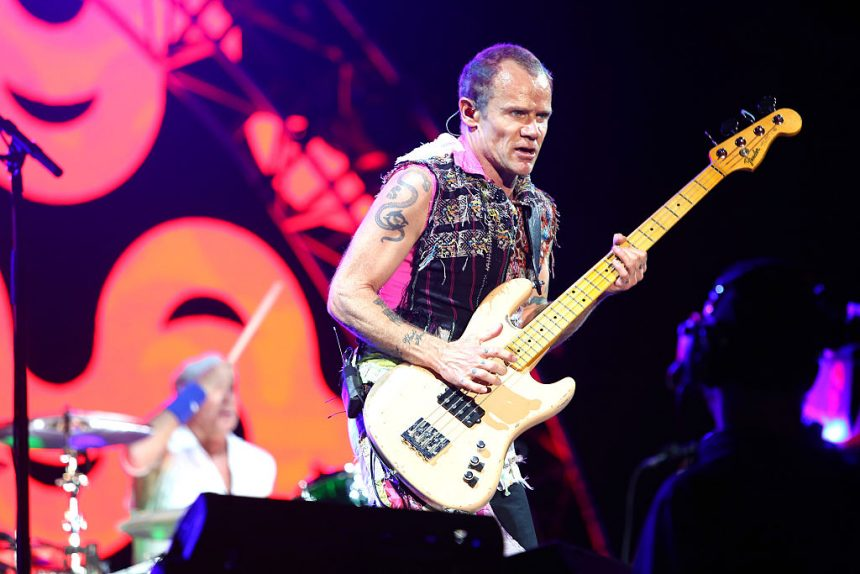 Flea (de Red Hot Chili Peppers) presta su bajo a la gorila Koko y esto sucedió