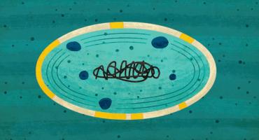 Cianobacteria: el organismo que destruyó y creó vida en la Tierra