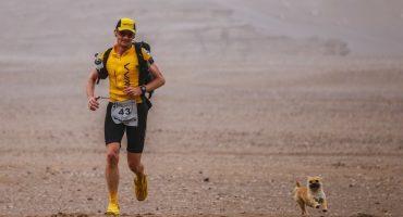 Gobi, la perrita callejera que corrió un maratón de 22 millas y consiguió hogar