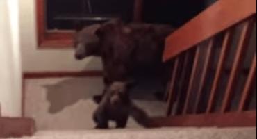 WTF?!?! Llega a su casa y encuentra unos osos adentro
