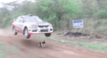 Microinfarto: ¡un perrito se paseó por una pista de carreras y casi no la cuenta!