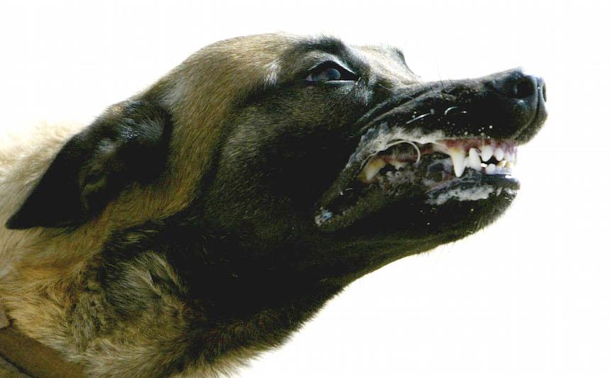 ¿Qué raza de perro es más propensa a morderte?