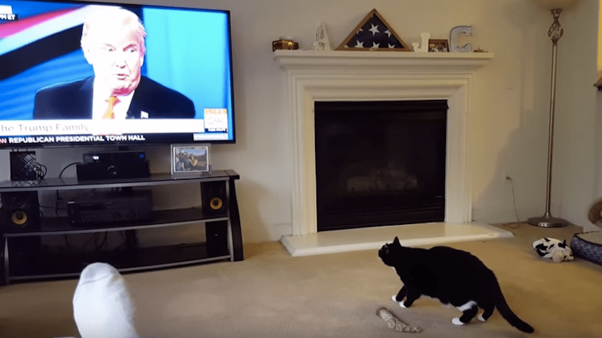 Video: Ni los gatos quieren a Trump