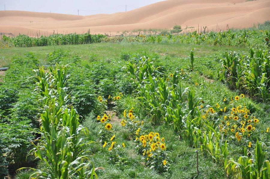 Científicos chinos aseguran que pueden convertir la arena en suelo fértil