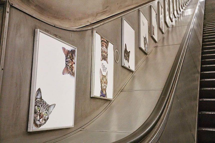Gatos Publicidad 6