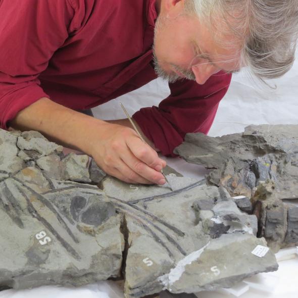 Ictiosaurio Fósil