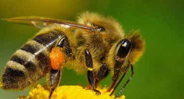 Un sujeto ebrio en Edomex muere al... ¿tragarse una abeja?