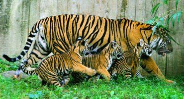 Los animales salvajes se han reducido dramáticamente en los últimos 40 años