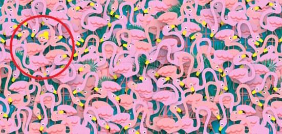 Flamingos Rompecabezas Respuesta
