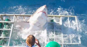 Microinfarto: el tiburón blanco que entró a la jaula de un buceador