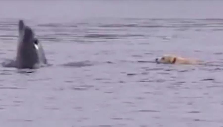 Un perrito y su amigo delfín nos enseñan que los animales son geniales