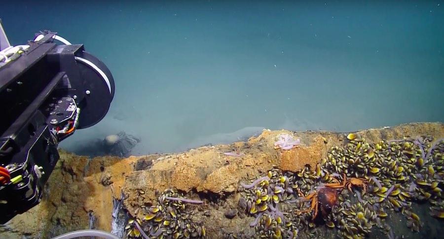 Zona tóxica en el Golfo de México
