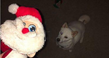 ¡Perrita obsesionada con Santa Claus conoce a su ídolo y la reacción es fantástica!