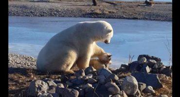 La historia detrás de la imagen del oso polar y su amigo perro
