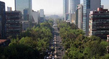 Gobierno de la CDMX compró árboles a empresa fantasma... al doble de precio