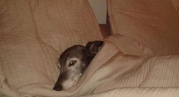 Es la cebolla: dueño planea el último paseo de su perro