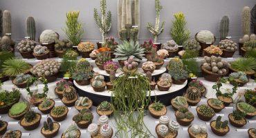Adopta plantas mexicanas en peligro de extinción