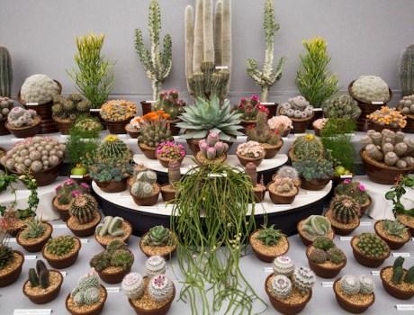 Adopta una planta mexicana