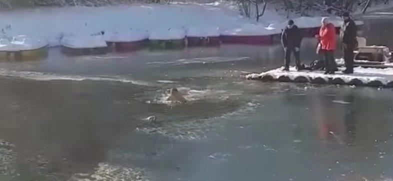 Hombre salva a un perrito en un lago congelado