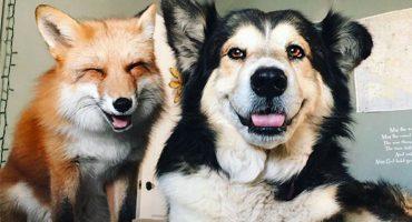 Estos animales nos enseñan que la amistad puede ser de por vida