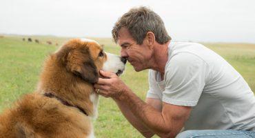 ¿Amas a tu perrito? Vas a querer ir a la premier de esta película