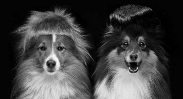 ¡Vean a estos perritos y gatitos con looks al estilo Die Antwoord!
