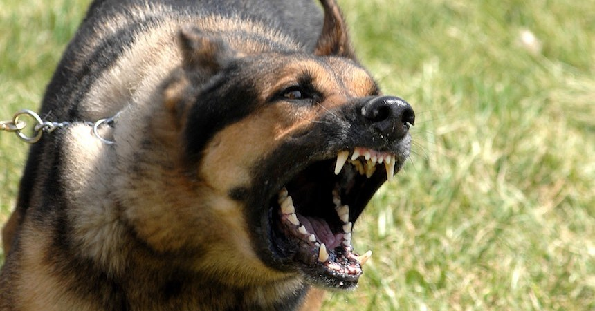Perro ataca a sus dueños