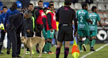 Porque Sergio Bueno: el entrenador culpó a un perro de su derrota