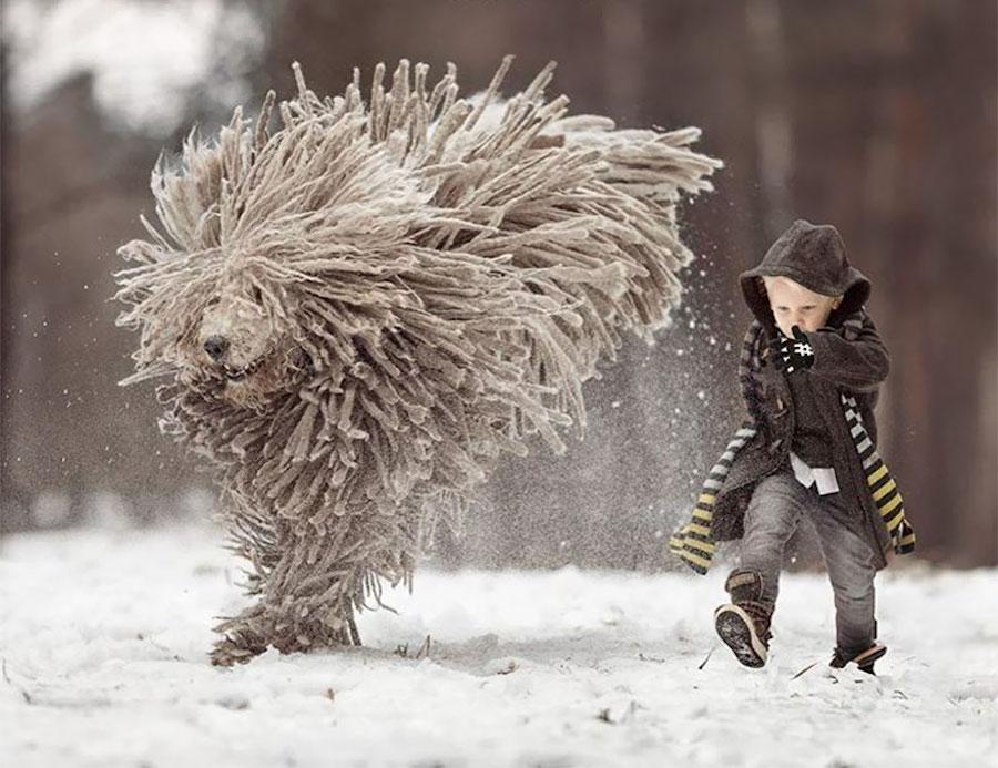 Perrito con mucho pelo