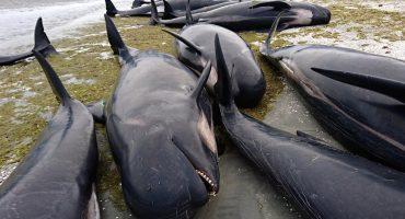 Encuentran muertas a más de 300 ballenas en costas de Nueva Zelanda
