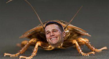 Bautizan en Atlanta a una cucaracha con el nombre de Tom Brady