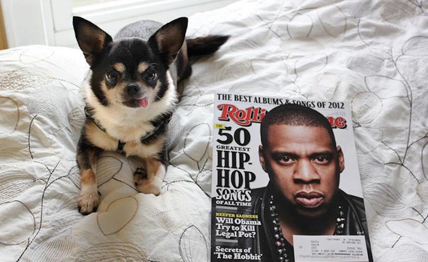 Jay-Z: la perrita desahuciada que dejó sorprendidos a todos