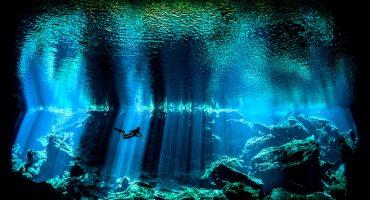 ¡Echen un vistazo a las mejores fotos submarinas del 2017!