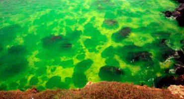 Sujeto tiró una bolsa al mar Negro y ahora éste es... ¿verde?