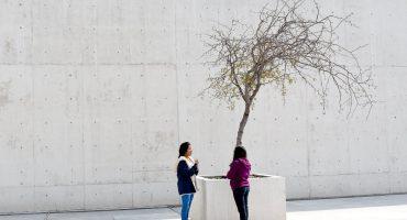 La obra del artista Gregor Schneider llega al MUAC
