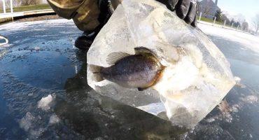 Este tal vez sea el momento más épico congelado en hielo
