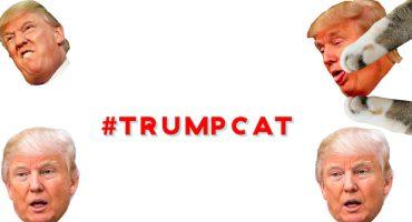 Una chica asegura que Trump quiere cerrar... ¿su web de gatitos?