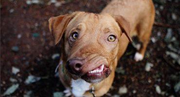 La historia de Picasso: el perro más bonito del mundo