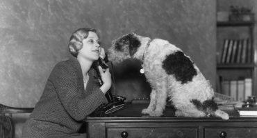 Estudio afirma que la gente que habla con su mascota es más inteligente