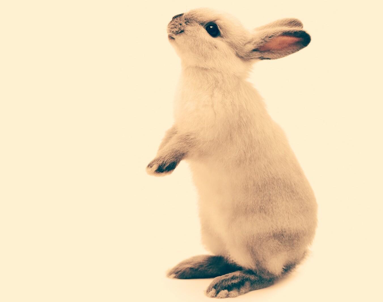 Conejo parado en sus patas traseras