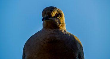¡Qué fregadazo!: paloma choca contra un hombre en una montaña rusa