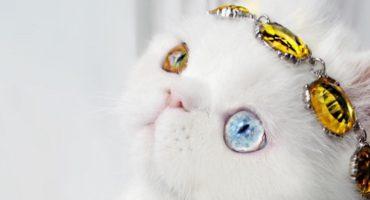 Conozcan a Pam, la gatita con los ojos más espectaculares del mundo