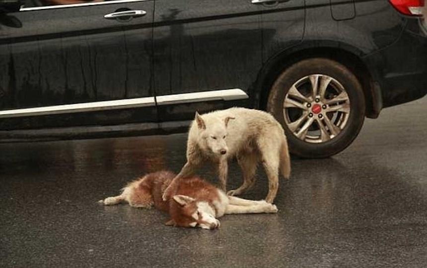 La historia del perrito que murió en China