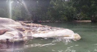 ¡Hay una gigantesca criatura muerta en Indonesia e Internet enloquece!