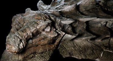 Conozcan el fósil de dinosaurio mejor preservado en la historia