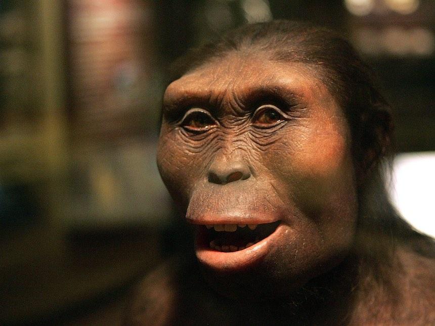 Lucy - Figura basada en un fósil