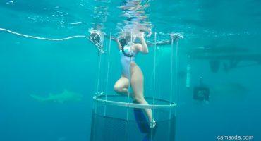 ¡Todo era falso!: expertos desmienten el ataque de tiburón a actriz porno