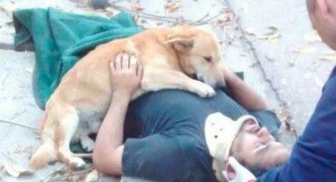 ¡Por eso los amamos!: perrito abraza a su dueño herido