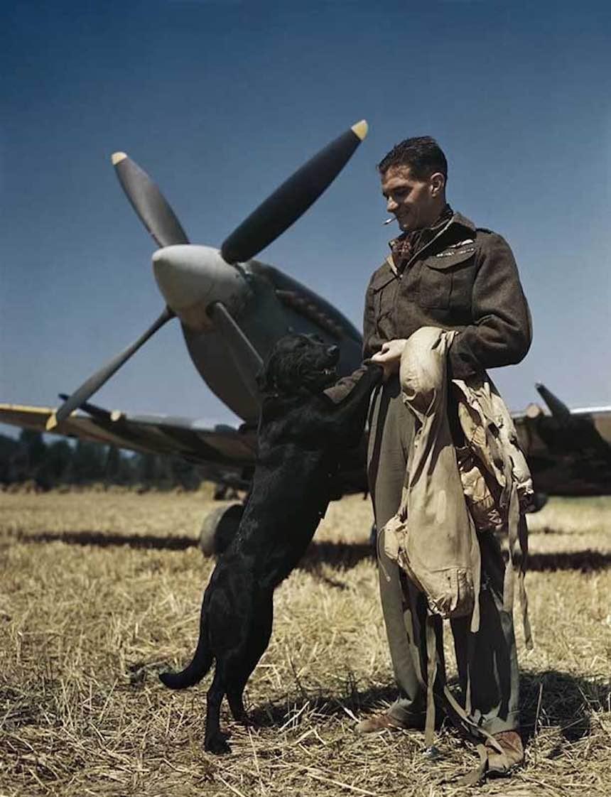 Segunda Guerra Mundial - Un piloto y su perro