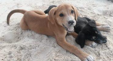 Potcake Place: ¡Una isla que está llena llena de perritos!